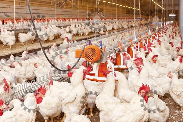 تجهیزات مرغداری گوشتی مادر